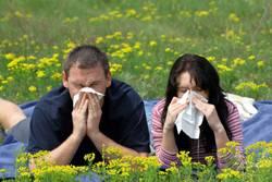 Аллергия на ноутбук