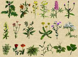 Лекарственные растения в медицине применение свойства польза и  Как показывает практика мы не всегда умеем грамотно и в полном объеме пользоваться дарами матушки природы которая щедро снабдила нас натуральными